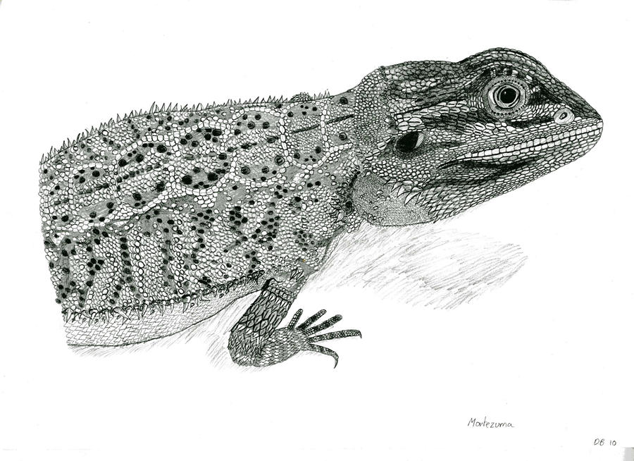 how to draw a simple bearded dragon