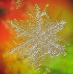 snow by Art-de-Viant