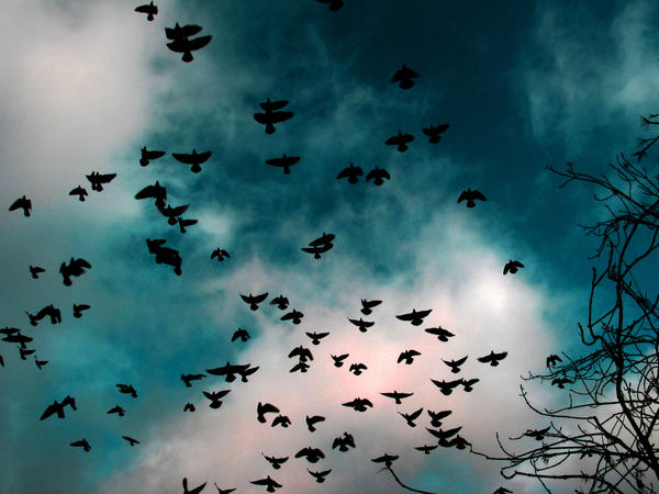 birds by strykmig