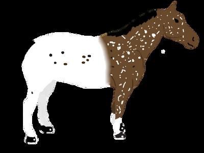 Horse by FjordBreeder