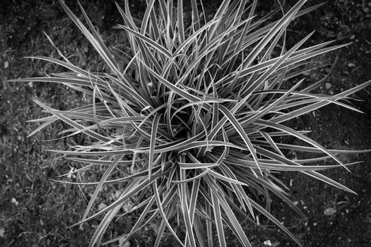 Updated Black and white Grass