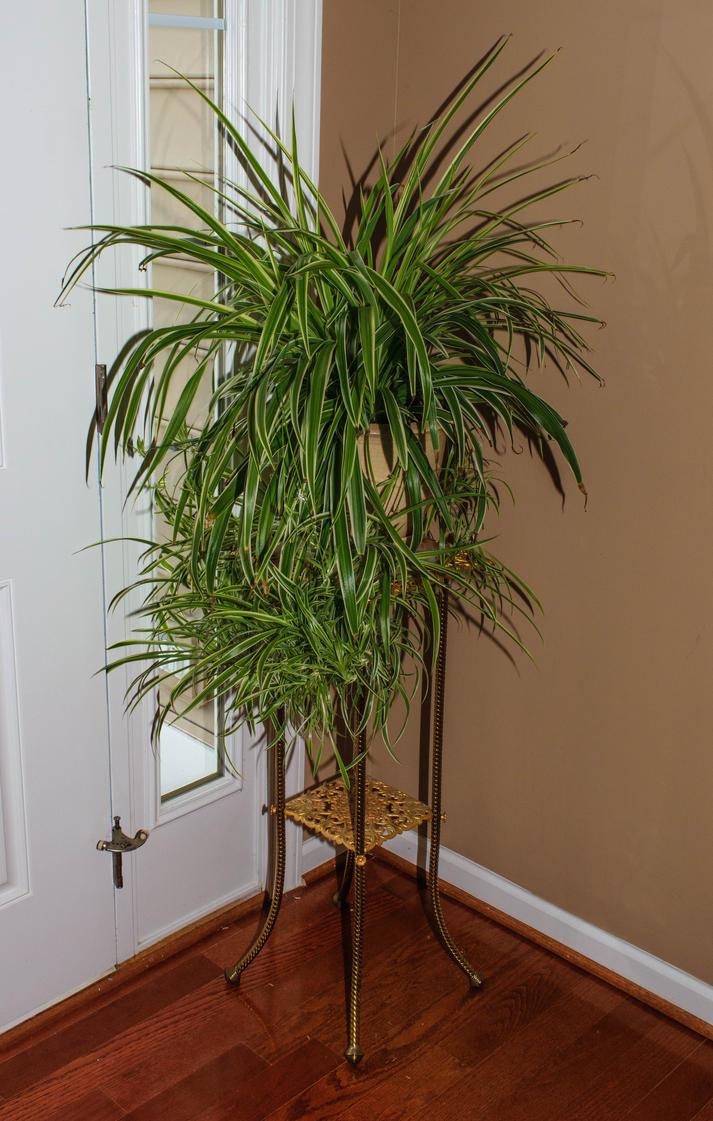 Foyer Plants : Foyer plant by manbart on deviantart