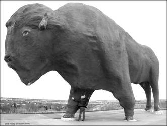 world's largest fake buffalo