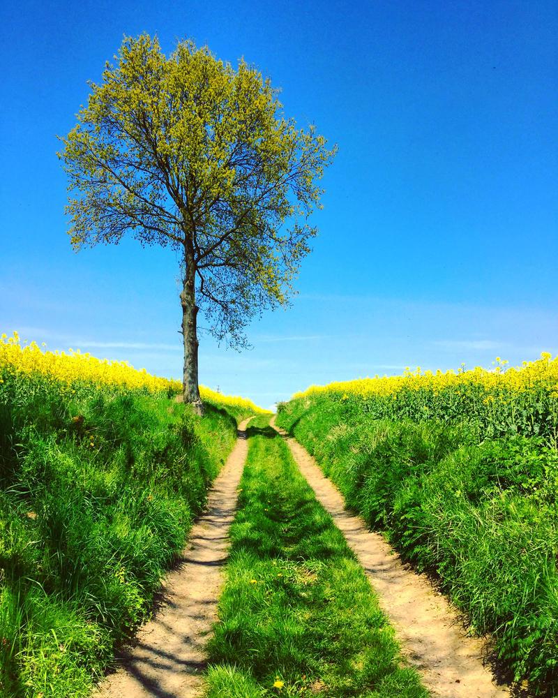 Polish Spring by RaphShea