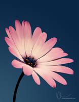 Blume by umayrr