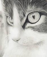 Kitty by kribu