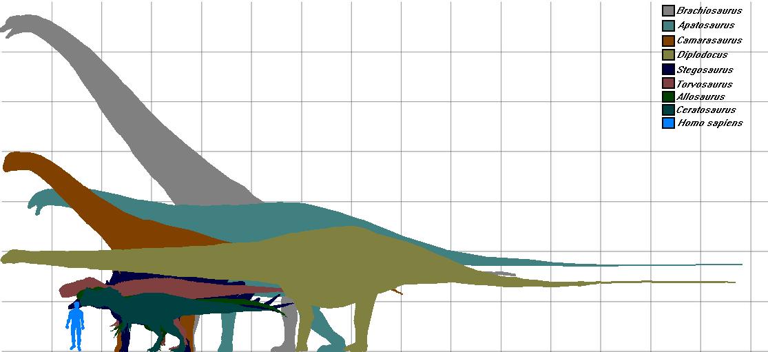 Morrison Dinosaur Size Chart By Gojira5000 On Deviantart