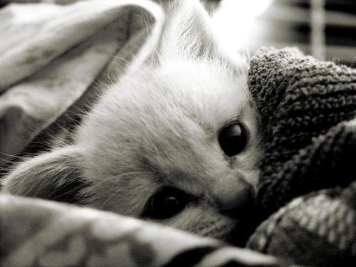 Kitten Smitten by lovelawlessly