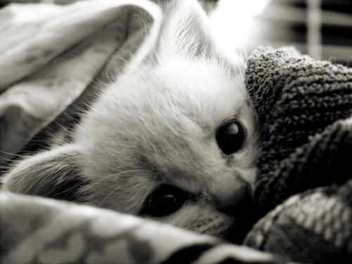 http://fc05.deviantart.net/fs13/f/2007/023/9/2/Kitten_Smitten_by_lovelawlessly.jpg