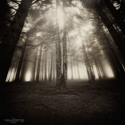 .:The Light Inside Us II:. by oguzceng