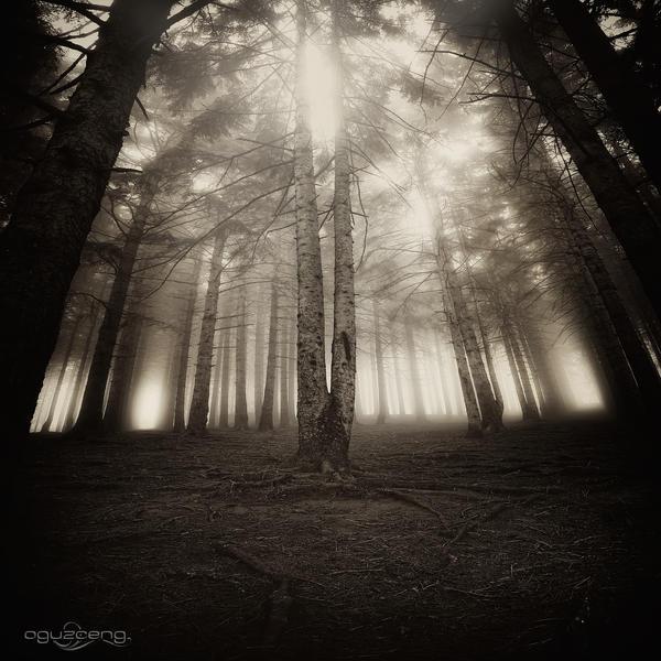 .:The Light Inside Us II:.