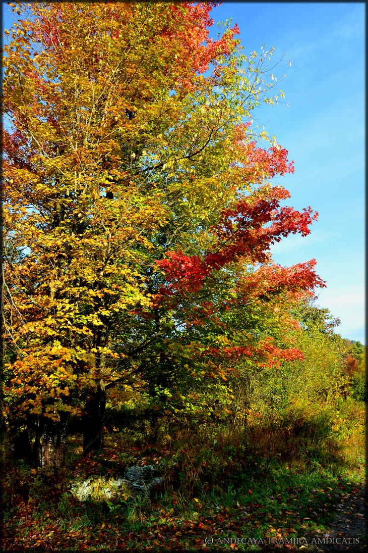 Autumn IX by Tramira