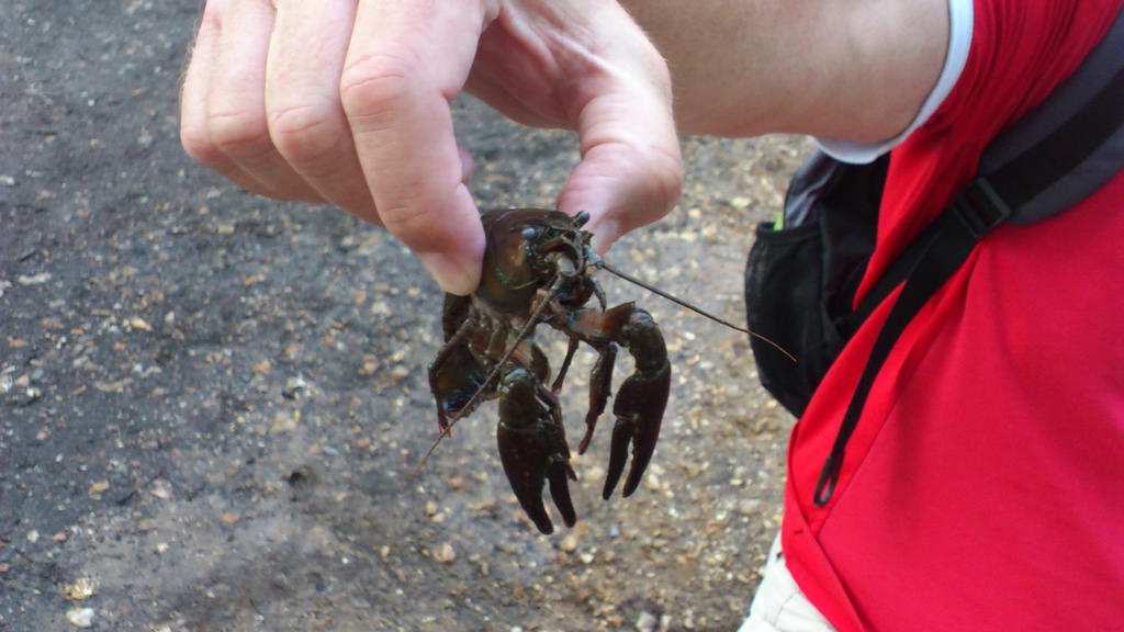Crustacean at Frimley Lodge by Dan-S-T