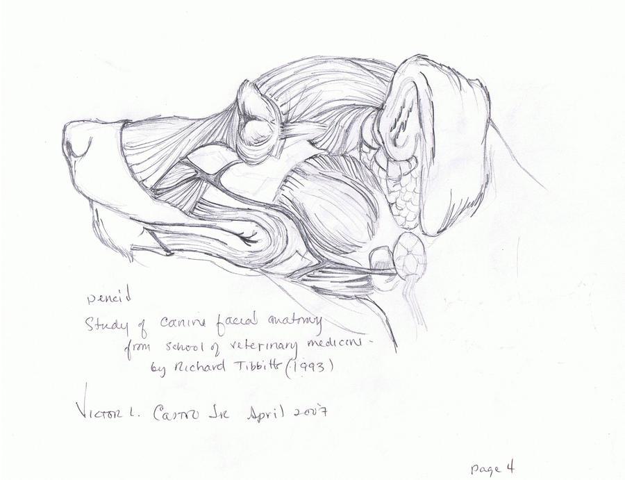 DeviantArt More Artists Like John Bryne Alpha Flight By