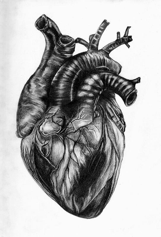 Heart by Arpmadore