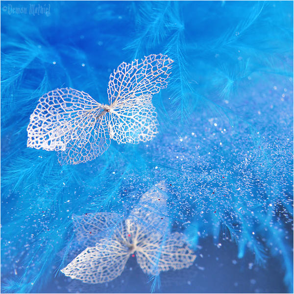 Lace Butterfly Dream