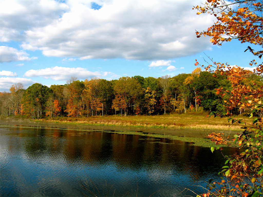 Colors of Autumn I