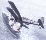 Eine Illusion des Seeadlers