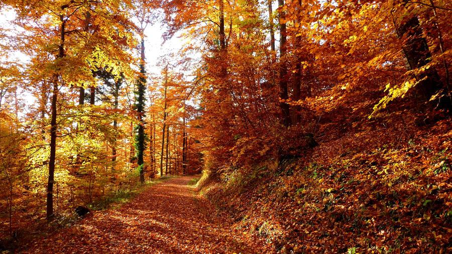 Autumn in Switzerland by Cadaska