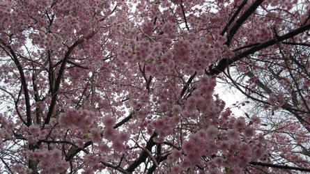 Pink Cotton by HaganeSora