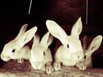rabbit heart. by Ritiinhaa