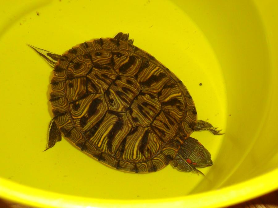 Turtle by hellokittygirl101