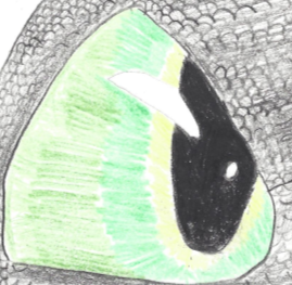 Toothless' Eye by DragonHaven42