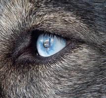 Eye See by DragonHaven42