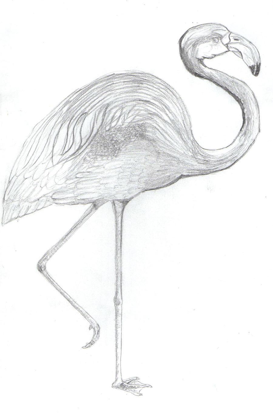 Flamingo pencil drawing