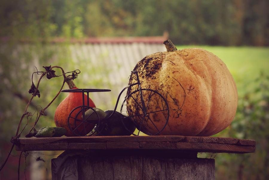 Autumn Goods 1 by ausra-paulauskaite