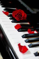 Piano:Rose by kazuaka