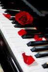 Piano:Rose