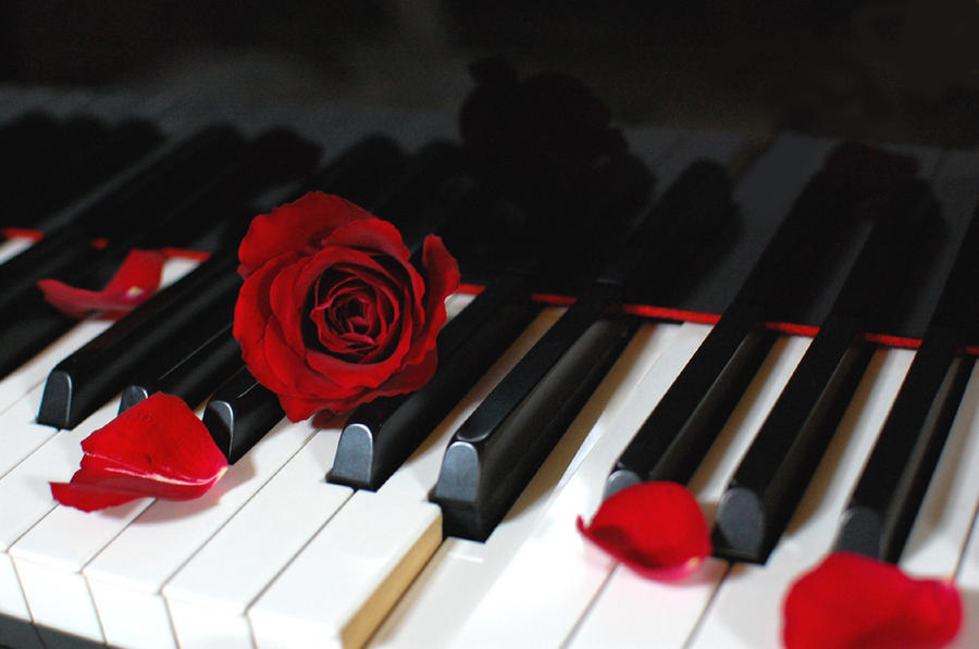 PianoRose 02 By Kazuaka