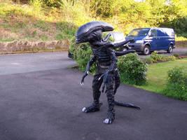 Alice T Alien