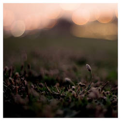 Spring Evening by veredgf