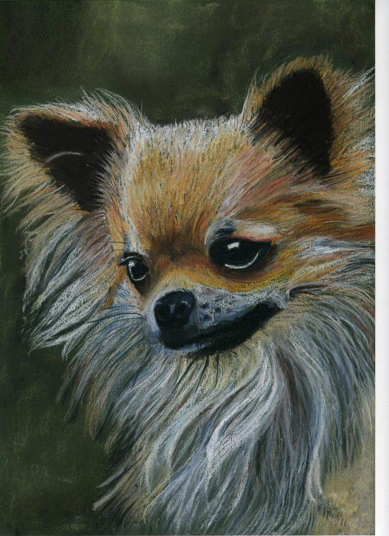 Chihuahua by PaulineMoss