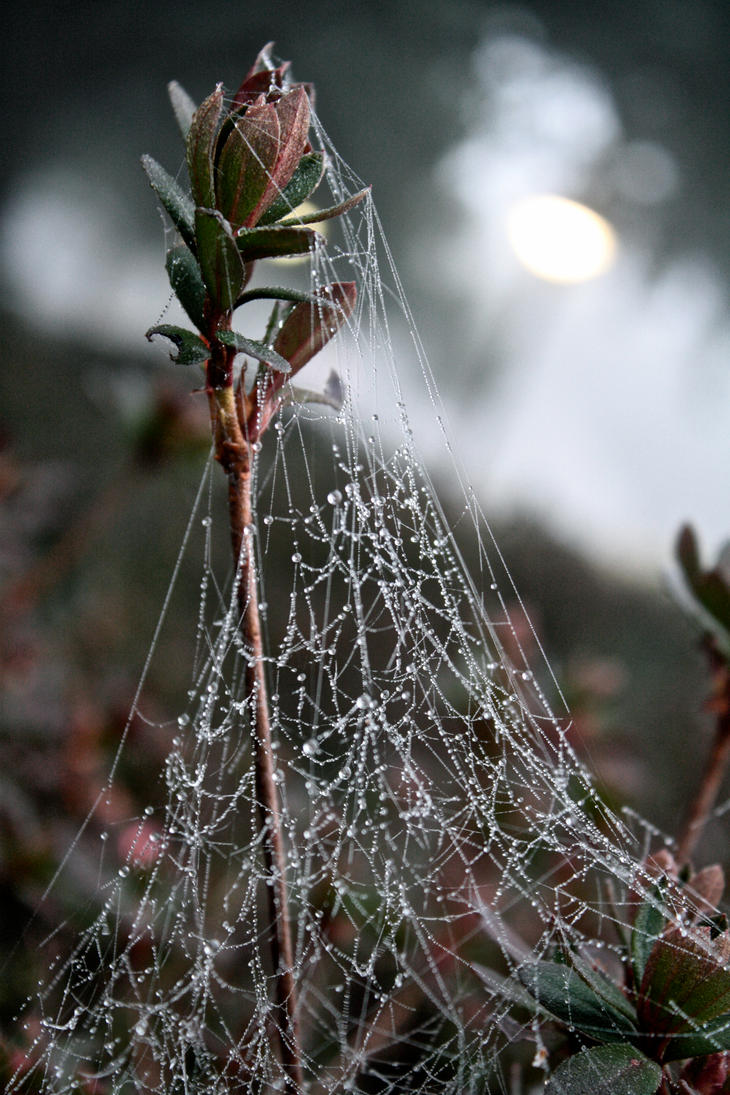 Web III by Adomius