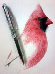 The Red Bird - Ballpoint Pen - WIP by srimant