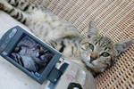 Cats of Israel