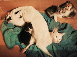 Kitty is a good mom by AnnaGiladi