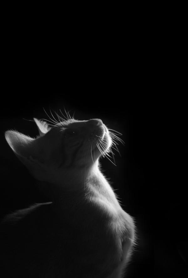 Beautiful Chetzi by AnnaGiladi