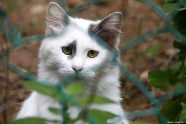 Meow by AnnaGiladi