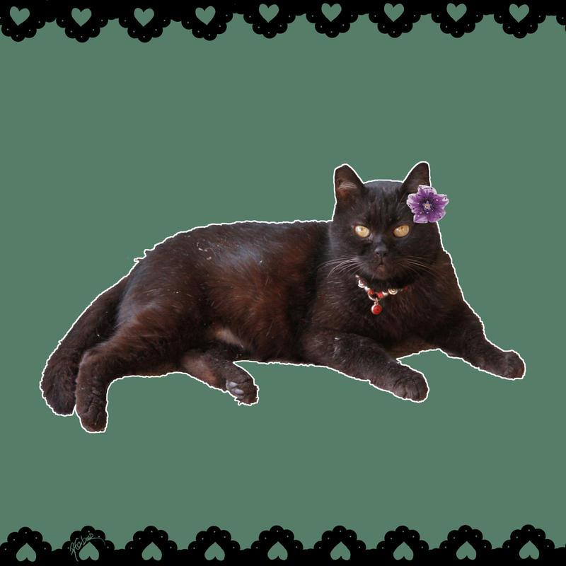 Grumpy black cat by AnnaGiladi on DeviantArt