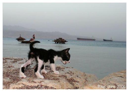 Moshe at the Red Sea by AnnaGiladi