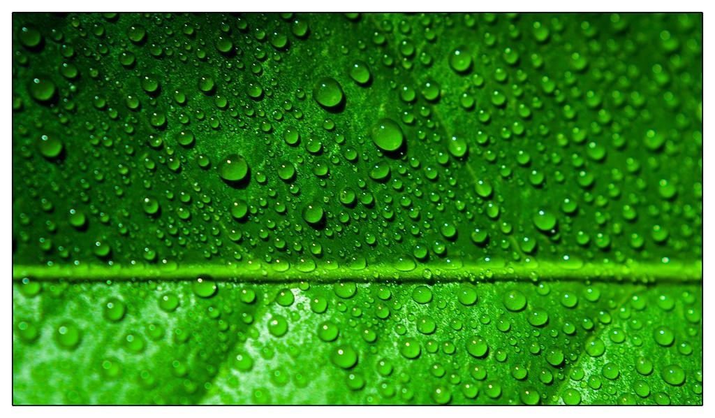 Green by ezhhh