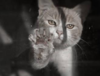 Let me out! by ezhhh