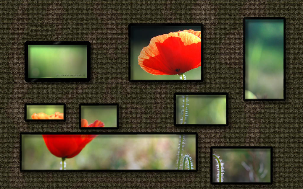 Poppy and frames 2560x1600 by tezdesign