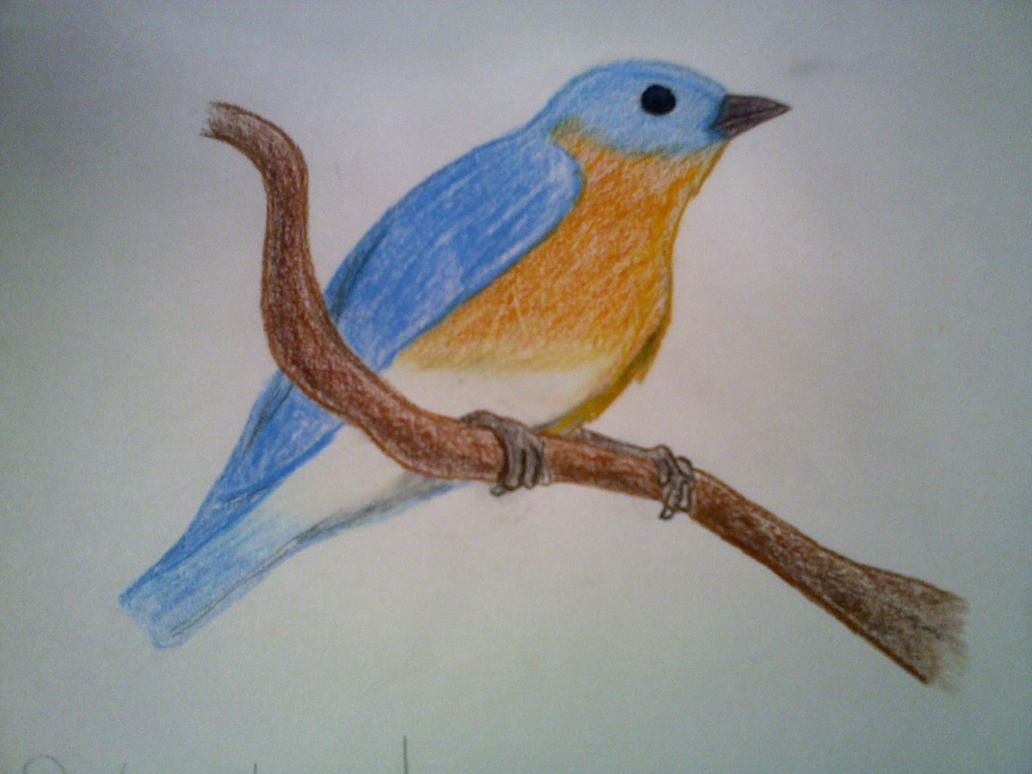Birds pictures drawing