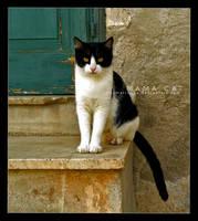 mama cat by ellymarinova