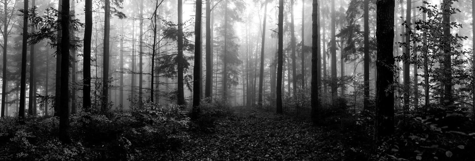 nebel impressionen - 4 by VooDooMania